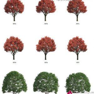 دانلود پرسوناژ درخت