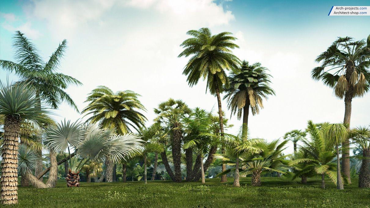 آبجکت درختان گرمسیری