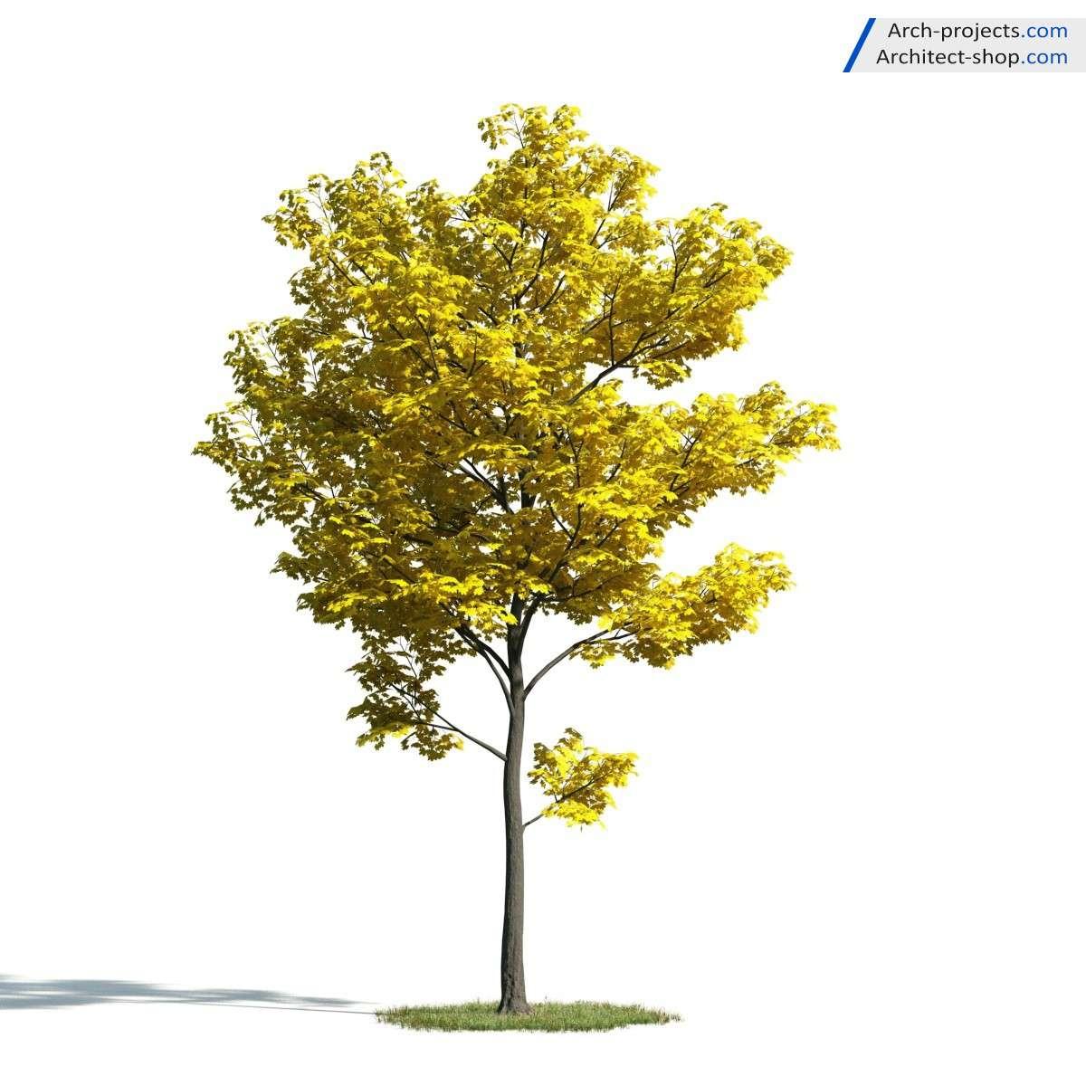 آبجکت درخت 3dmax